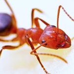 Dealing with an ant infestation in office